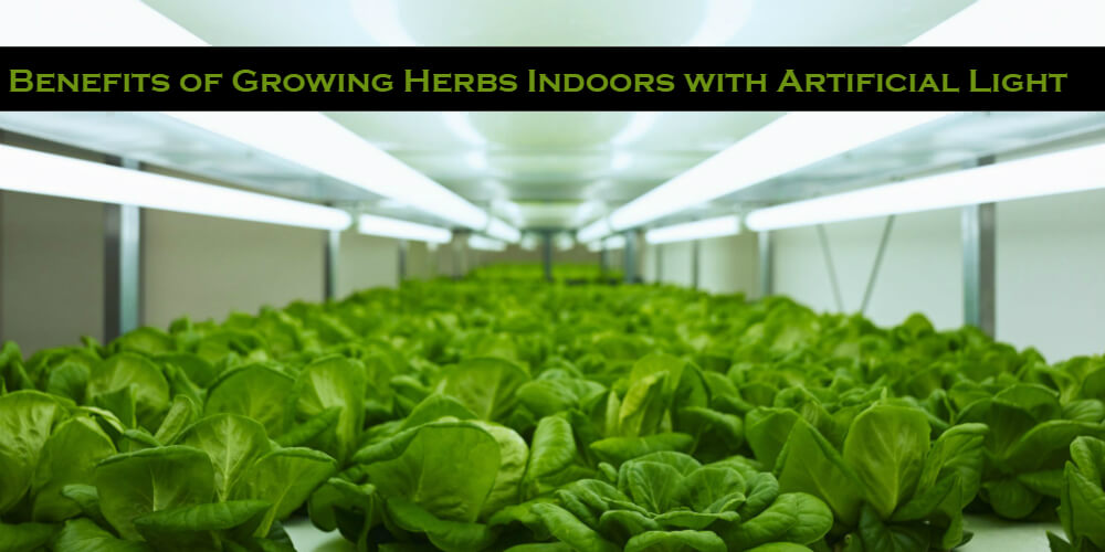 Benefits of Growing Herbs Indoors with Artificial Light