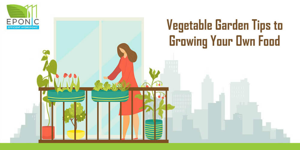 Vegetable Garden Tips to Growing Your Own Food