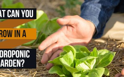 What Can You Grow in a Hydroponic Garden?